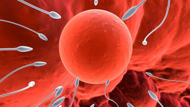 Sự hình thành và phát triển của thai nhi diễn ra như thế nào?
