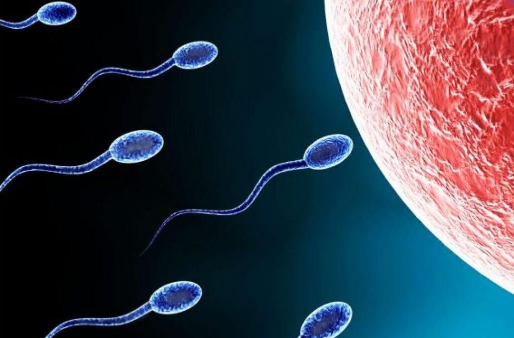 Cấu trúc dạng xoắnở đuôi tinh trùnggiúp tinh trùng bơi nhanh và đúng hướng hơn
