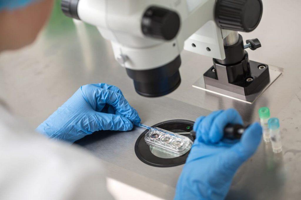 các nhà nghiên cứu đã nuôi cấy thành công trứng người từ một tế bào trong buồng trứng